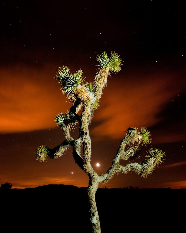 Joshua tree moon and stars. Joshu Tree national park.