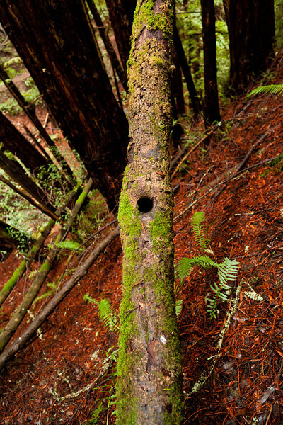 Knotty - Mill Valley, CA