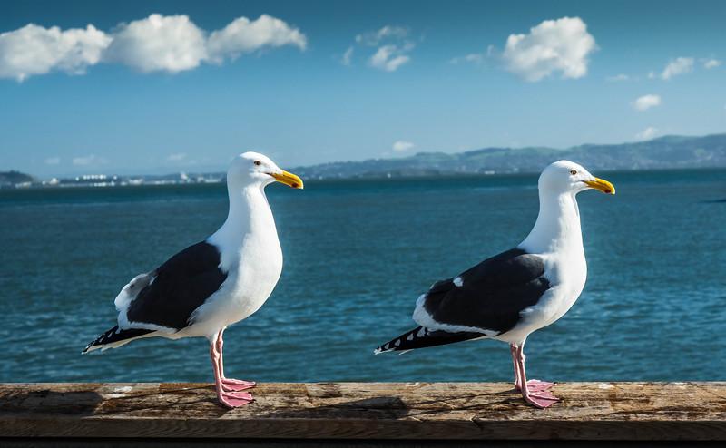 Tourists, San Francisco