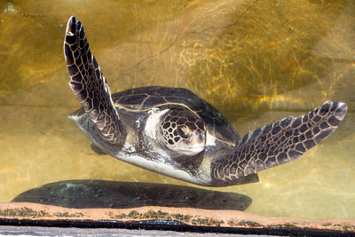 CA-San Diego Bay National Wildlife Refuge