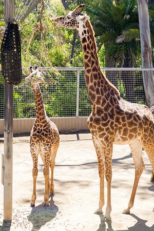 CA-San Diego Zoo