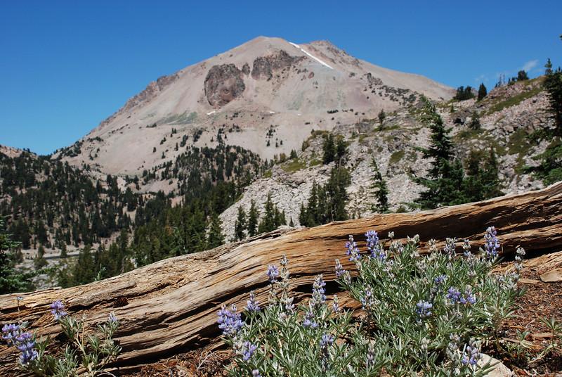 """<span id=""""title"""">Lassen Peak, Log, Flowers </span>"""