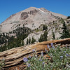 "<span id=""title"">Lassen Peak, Log, Flowers </span>"