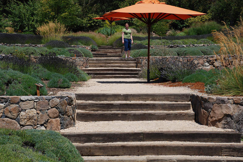 "<span id=""title"">Steps through Lavender Fields</span>"