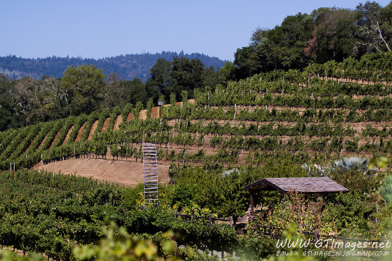 Vinyards at Benziger.