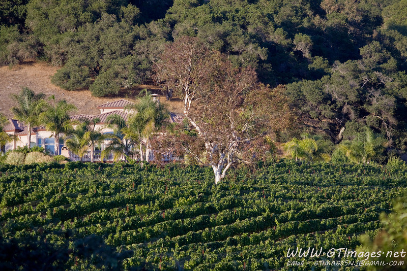 A close up of the vineyard across from the Gables....