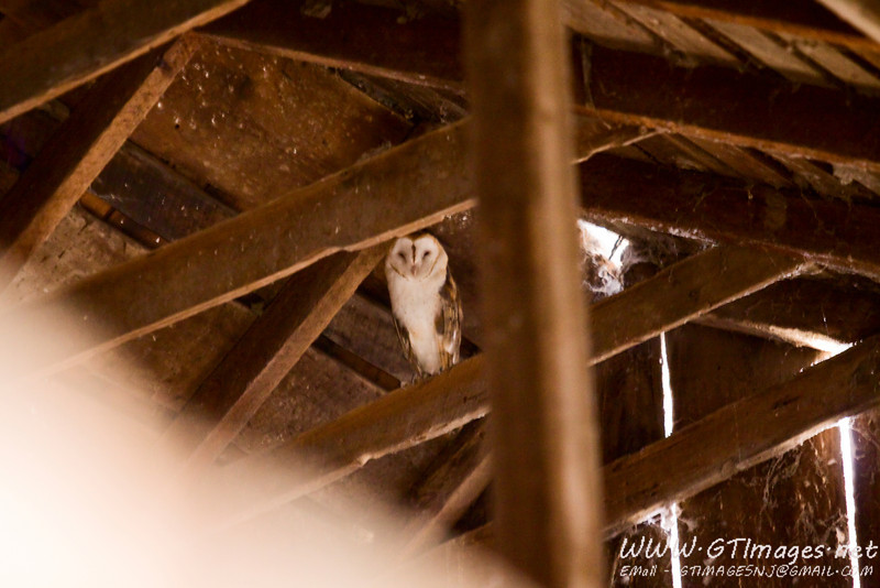 The Gables Inn had a barn, complete with a barn owl. This photo did not come out that good, as it was very low light.