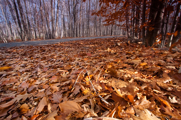 trees and fallen leaves