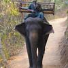 Smoking Elephant Driver Angkor Wat