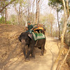 Elephant Driver Angkor Wat