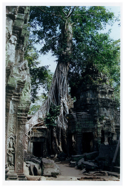 "Ta Prohm at Angkor-- where nature says, ""Get the fuck out of the way""."