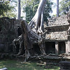 Preah Kahn - nature and architecture learn to coexist.