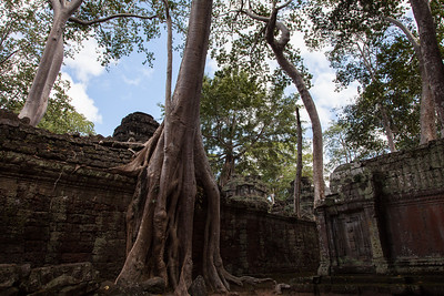 What makes Ta Prohm so famous (aside from being a location for the filming of Tomb Raider) is that the jungle still holds control over much of the temple. This tree is an example of how the jungle has never really been cleared from the site like most of the other temples. Presumably, this is how the original explorers must have found the temple when they discovered it.