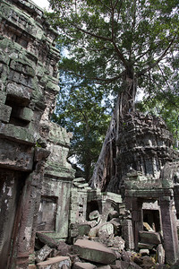 More cool trees at Ta Prohm.