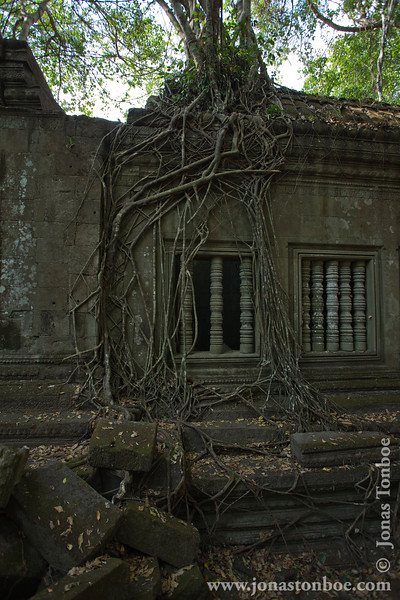 Tree Roots Covering Main Temple