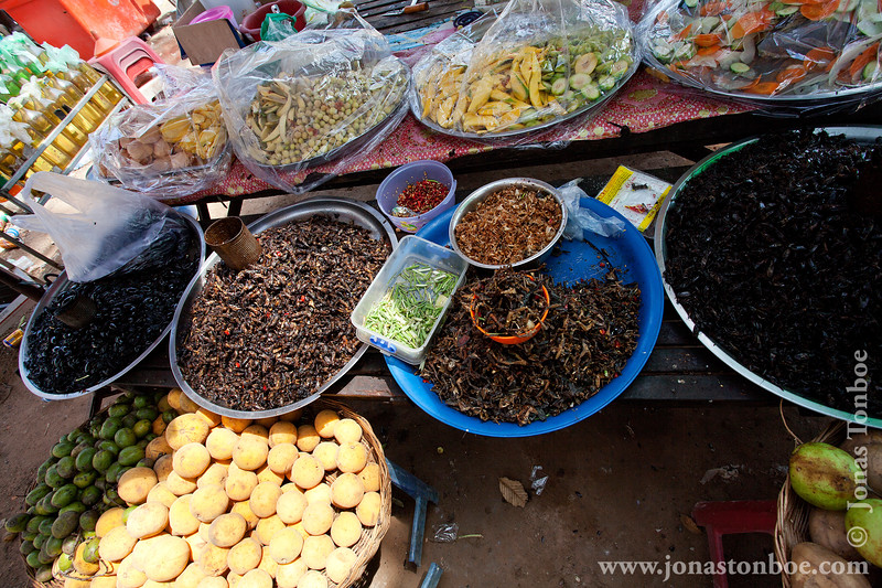 Beetles, grasshoppers and Frogs For Sale