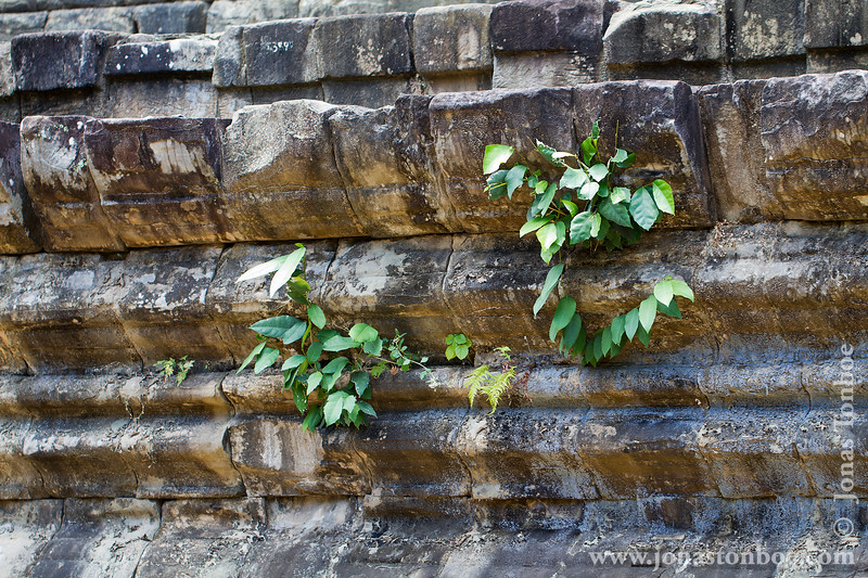 Vegetation Growing on Main Temple
