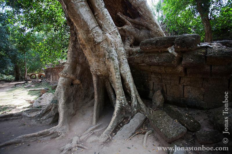 Tree Growing on Main Temple