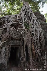 Siem Reap. Ta Prohm