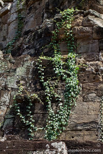 Vegetation Covering Main Temple