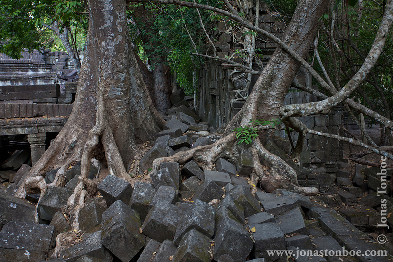 Trees Growing on Main Temple Stones