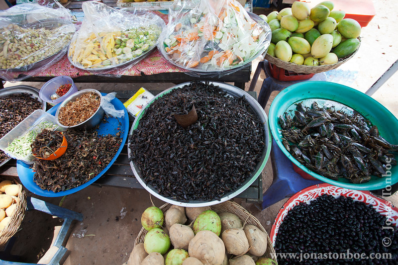 Grasshoppers, Frogs, Beetles and Cicadas For Sale