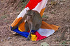 Long-tailed Macaque Playing With a Flag
