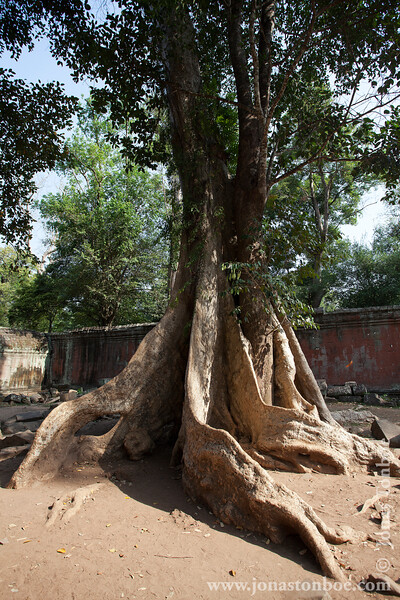 Tree in Main Temple Courtyard