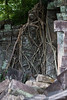 Main Temple Wall Covered in Tree Roots