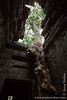 Tree Growing Through Roof of Main Temple