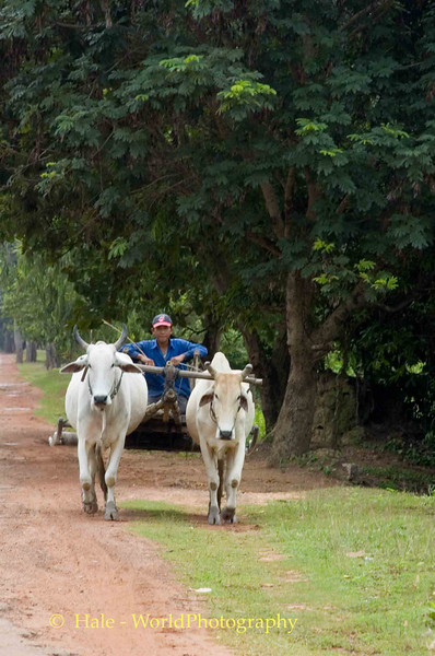 Headed Down The Highway, Siem Reap, Cambodia