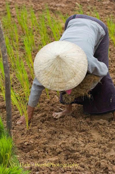 Back Breaking Work in Cambodia