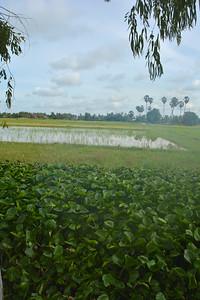 Phnom Kulen National Park 4x4 Quad Bikes Siem Reap Cambodia October 2015