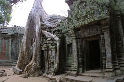Growth at Angkor Thom
