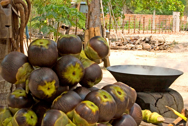 Coconuts from Palm Sugar Trees