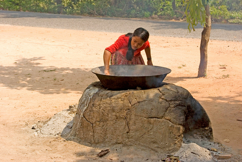 Brewing Sugar from Tree Sap