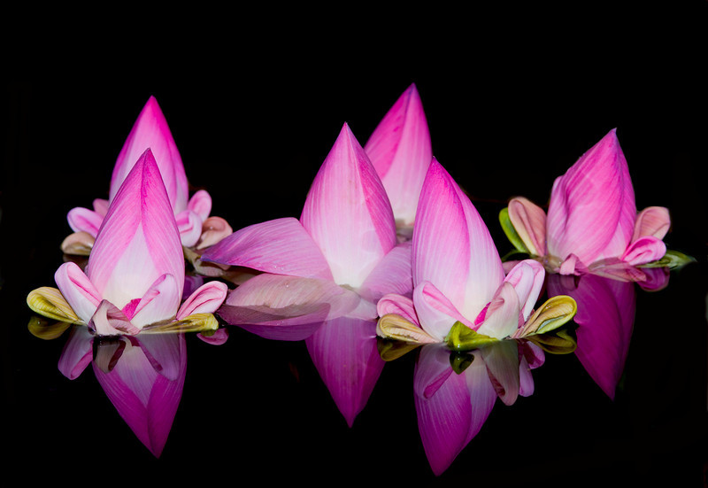 Floating Lotus Blossoms At Hotel de la Paix