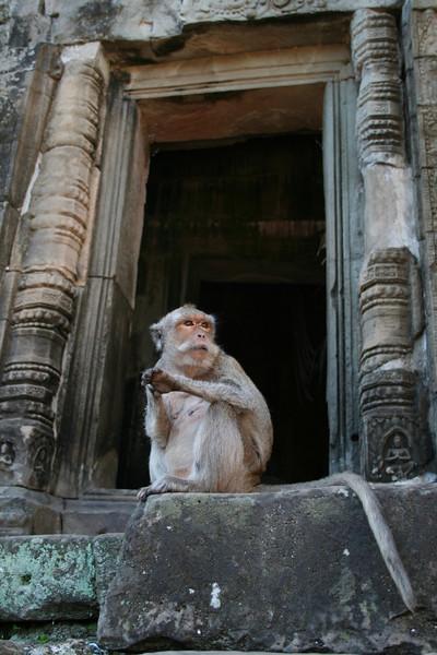 Pensive monkey at Bayon Temple, Angkor Thom, Siem Reap, Cambodia.