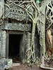 Cambodia - Siem Reap - Angkor - Ta Prohm - door covered by banyan tree root