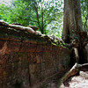 Tree growing on a wall at Ta Prohm