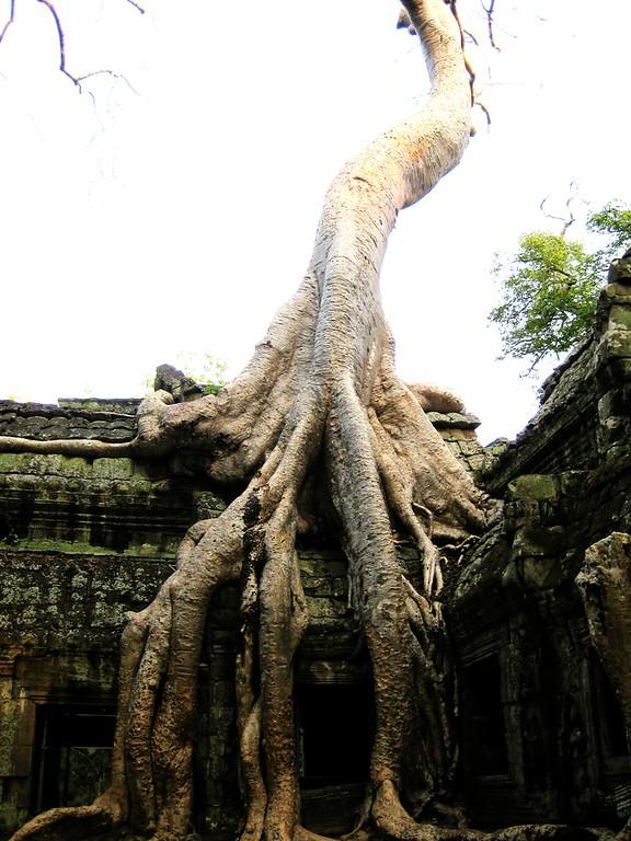 Ta Prohm, Siem Reap Cambodia.