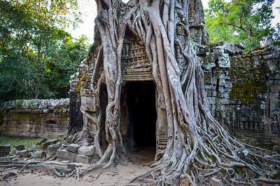 Tree doorway