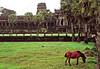 Cambodia - Siem Reap - Angkor - Angkor Wat - perimeter - horse