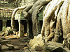 Cambodia - Siem Reap - Angkor - Ta Prohm - temple and roots