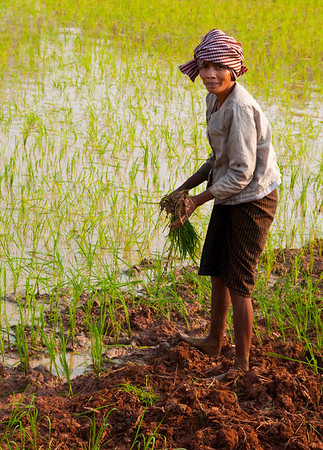 Rice Farmer (women work very hard in the fields)