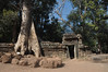 1341  Cambodia - Siem Reap, Ta Prohm