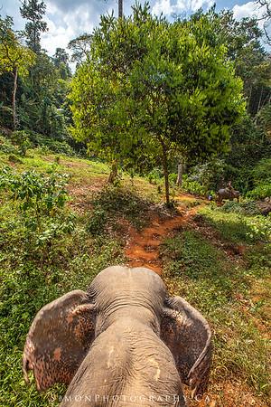 Riding elephants in Khao Sok