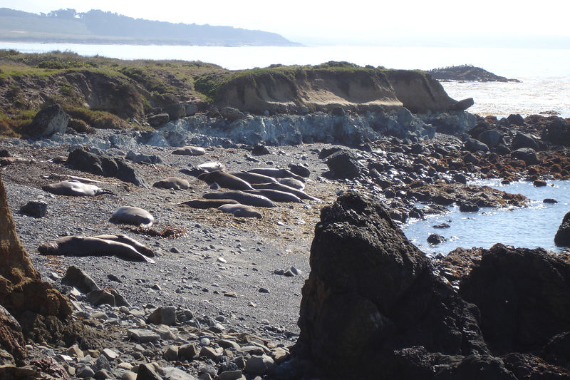 First view of the new Elephant Seal colony just  North of Hearst Castle.