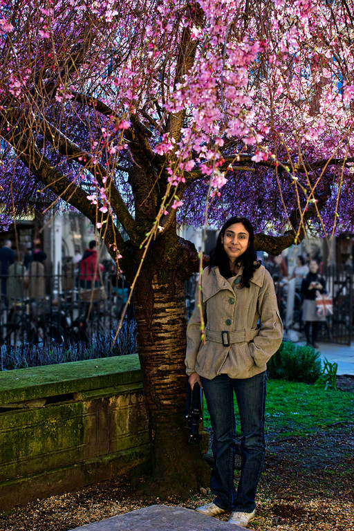 The lovely cherry blossom tree in front of the University Church of the Great St.Mary's