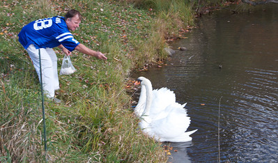 Jeff and his Swans